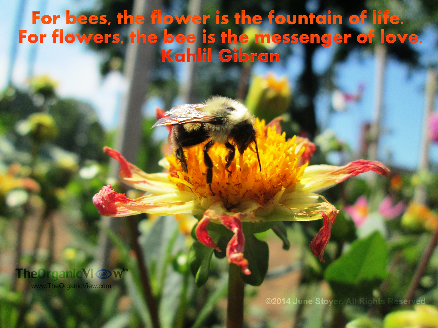 for bees the flower is the fountain of life for flowers the bee